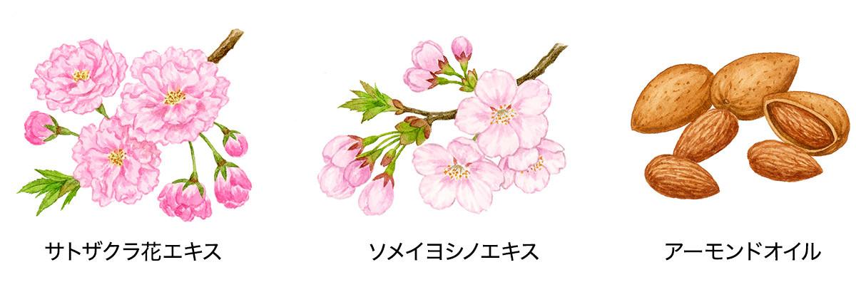 サトザクラ花エキス・ソメイヨシノエキス・アーモンドオイル