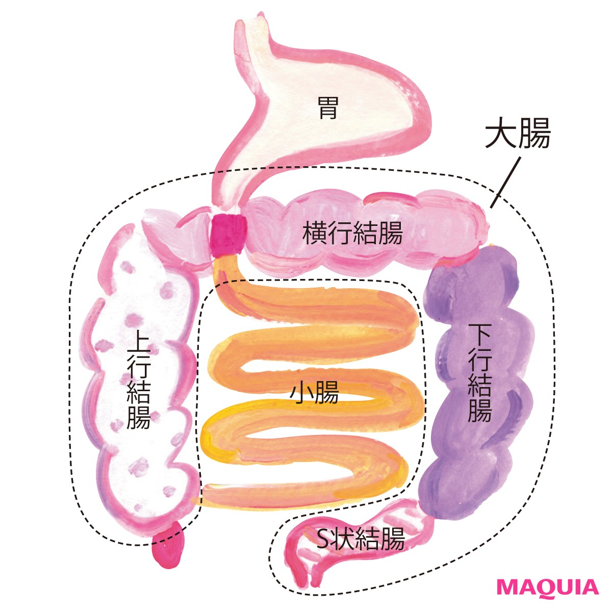 キレイのために知っておきたい【腸の基礎知識10】