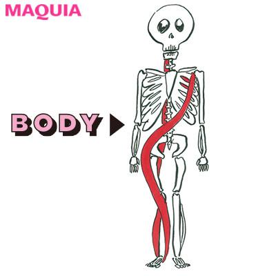 体の前面・筋膜