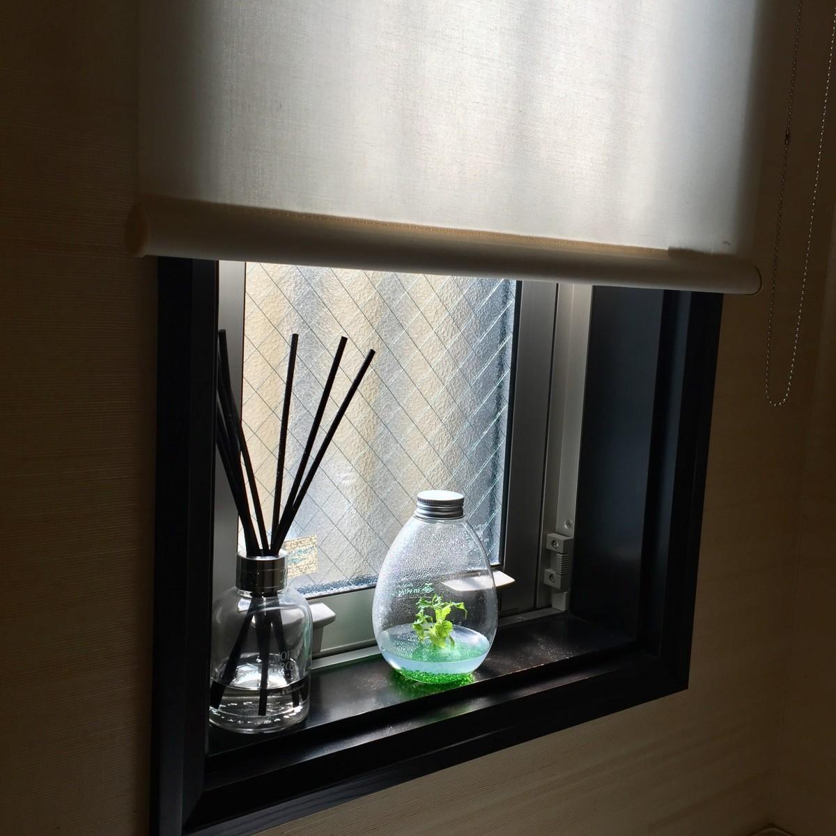 見つめる癒しどこに置く?!最先端バイオ「インビトロフラワー」水やり肥料の心配はなし、私の隣で花が咲く。「もう枯らせない!」たまご形ボトルの中は無菌、虫も水こぼれの心配もなし。