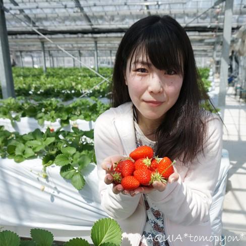 赤い宝石♥甘いイチゴの見分け方!ビタミンCの宝庫、いちご狩りに行ってきました♪