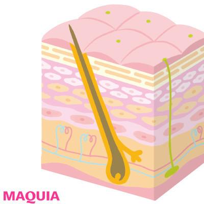 【菌活 | 美肌菌って? 発酵食品や飲み物など、スキンケア・ダイエット・ボディケアにおすすめの菌活まとめ】_Q 美肌菌は皮膚のどこにいるの?
